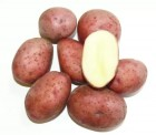 Семена Картофель АЛЬВАРА 2 кг