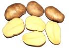 Семена Картофель ТУЛЕЕВСКИЙ 2 кг