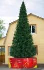 Ель ствольная GREEN TREES Альпийская 3м (хвоя-пленка)